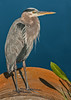 • Location - Viera Wetlands<br /> • Great Blue Heron Portrait