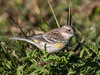 • Location - Tosohatchee State Reserve • Yellow-rumped Warbler