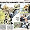 My spot of fun up close with a cheeky cheetah.