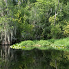 Images taken August 2014 in Okefenokee Swamp