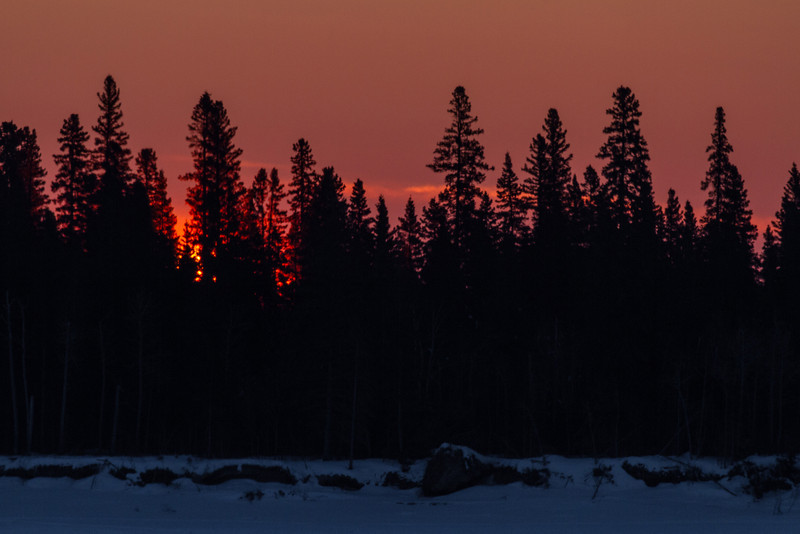 Sunrise over Butler Island in the Moose River. Just a thin band of colour over the trees. Minus 30 windchill minus 40.
