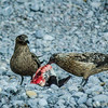 Great Skuas Dining