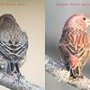 Finch comparison
