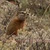 Looking for the other Marmot.