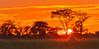 Sunset in Hwange #3