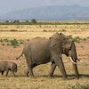 Mother Elephant and Calf,  Lake Manyara National Park. Tanzania, East Africa.