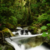 The cleanest and beautiful river in Costa Rica, located at the rain forest in a little village called San Gerardo de Dota.