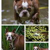 Hunting Frogs