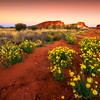 Wildflowers dance in the desert light of Rainbow Valley, Red Center, Australia.  © Douglas Remington - Ethereal Light® Photography, LLC. All Rights Reserved. Do not copy or download.