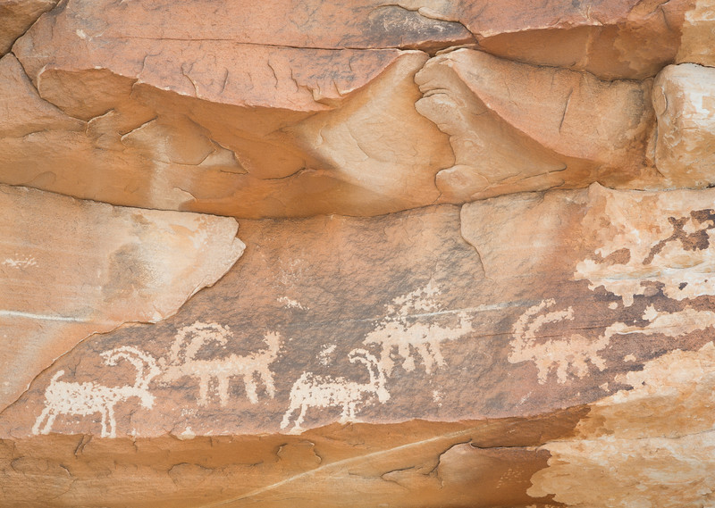 Petroglyphs of bighorn sheep. Taken in the Gold Butte area of Nevada, USA.