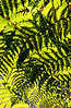 fern frond shadow