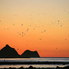 Sunset with seagulls pver Sugar Loaf Marine Reserve in New Plymouth