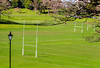 Rugby playing fields<br /> Auckland Domain