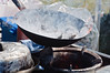 Mussels cooking in a wok<br /> Matakawau<br /> Awhitu Peninsula<br /> North Island<br /> New Zealand