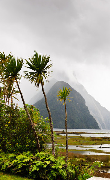 Cabbage trees<br /> Milford Sound<br /> Fjordland National Park<br /> New Zealand