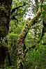 Undergrowth<br /> The Chasm<br /> Fjordland National Park<br /> South Island<br /> New Zealand