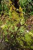 Moss and lichens Dawson Falls Egmont National Park Taranaki New Zealand