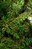 Moss and lichens undergrowth<br /> McClean Falls<br /> The Catlins<br /> South Island<br /> New Zealand