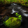 The mossy rock  © Douglas Remington - Ethereal Light® Photography, LLC. All Rights Reserved. Do not copy or download