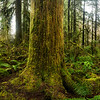 Oregon rainforest. 360 degree panorama