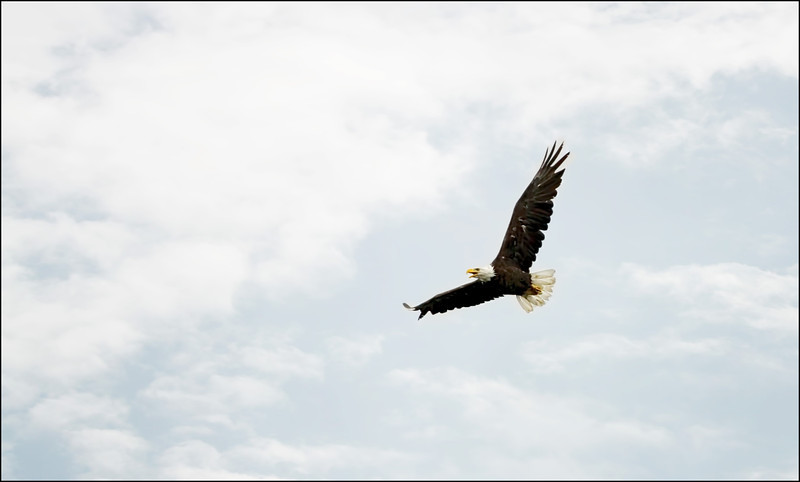 first attempts at taking pictures of a Bald Eagle in flight - Dore Lake, Saskatchewan
