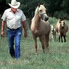 Guy Wilson, walks his hores up from the back pasture Tuesday afternoon at his home in Elderville.Kevin Green