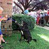"Dylan Lantz, 5, teaches ""Wendy"" how to reach for a treat as they await their turn in the Overton Kid's Pet Show Thursday at McMillan Library. Matula photo."