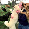 Dr. Gail Stockman gets some attention from two of her many dogs at her farm in Hallsville Friday morning. Kevin Green