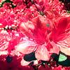 Flowers for 1997 Garden Tour. Kevin Green