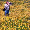 Burton F. Stansbery, of Longview, takes advantage of the sunny weather to photogragh some of the yellow wildflowers  Wednesday morning at the I-20 overpass at Estes Parkway and I-20 in Longview. Kevin Green