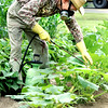 Sid Stafford, of Hallsville sprays for aphids on his squash plants in his garden along FM 450 in Hallsville Friday afternoon, Sid has been gardening for about 20 years. Kevin Green