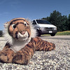 A discarded stuffed tiger on the side of FM 1844 near Mozelle Johnson Elem. Friday. The animal was removed from the middle of the road earlier in the day. Darlene Chapman-Davis.