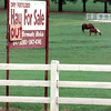 Date:   8/17/98----A sign at the Spitfire Valley Ranch on Texas 64 in Turnertown that normally has hay for sale is out  due to the hot weather and very little rain as horses graze in the background Monday afternoon. Kevin green