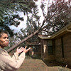 Mildred Cregler, points out one of four pine trees that fell on her house in between Gladewater and Gilmer on H 271, Thursday morning, Mildred had a total of ten trees fall in her yard during Wednesday night's storm. Kevin green
