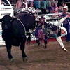Date:   6/10/98---Travis Sullivan, of Moriarty NM. doesn't fininsh his ride on Black Magic Wednesday night at the Gladewater Round-Up Rodeo in Gladewater. kevin green