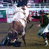 Date:   6/12/98Johnny Moffett trys not to get stomped on during Friday night's Gladewater Round Up Rodeo in Gladewater. kevin green