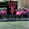 Date:   5/22/98---Pink flamingoscover the lawn at #9 Centernary Cir. Friday afternoon in Longview as the Easter Seals fund-raising by flocking your friends continues. Kevin green