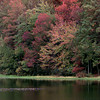Date:   11/4/98----Trees at Daingerfield State Park looking across the lake. Kevin green