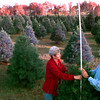 Date:   11/24/98---James and Mary Robinson measure one of 1600 trees they will have to sell for Christmas Tuesday afternoon at the farm. Kevin green