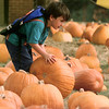 Date:   10/29/98---Aaron Myers, 5, rolls his pumpkin of choice across a pumpkin patch at St. Lukes United Methodist Church in Kilgore Thursday. The opened on Oct. 13 with nearly 1800 goards, but now they've discounted them all in the waning days until Halloween. bahram mark sobhani