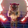 8/31/99---A bengal tiger leaps through a ring of fire during the evening performance of the circus at the Longview Rodeo Arena. The George Carden circus had two performances Tuesday to benefit the Sharon Shrine. bahram mark sobhani