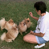 7/29/99-Edei Landeinger shows how her prize winning pomeranians obey commands.  Jessica Williamson
