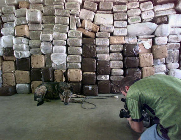 5/6/99---Gregg County Sherriff's K-9 Max is taped by a television cameraman in front of a wall of pot he sniffed out during a routine traffic stop on I-20 Thursday. The marijuana weighed in at more than 2700 pounds and is said to have a street value of $2-$4 million. bahram marks sobhani