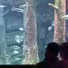 5/27/99---A lit aquarium provides a glimpse of fish life as a couple watches a film presentation in the Texas Freshwater Fishery theatre. bahram mark sobhani