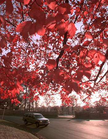 11/10/99---A vehicle moves along Yates St. in Longview under a canopy of colorful foliage. bahram mark sobhani