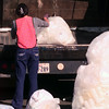 11-13-99---A teen from the Gregg County JDC empties plastic bottles into a trash truck during recycle day at Kilgore Police Station Saturday morning in Kilgore. Kevin Green