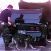 11-3-99--David Falco, with Kilgore Police Dept. runs his K-9 around a car after DPS troopers stoped the car on I-20 in Gregg County. Kevin GReen