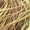 10/8/99---Strands of cane lie on Harland Barton's work table. Cane, the material Barton uses to seat chairs, is a natural material grown in Asia. bahram mark sobhani