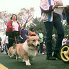 10/30/99---Galia Hutchinson, far left, and Sharon Shaw walk Hutchinson's dogs, Kenny and Precious, in the American Heart Walk Saturday on the streets of Longview. bahram mark sobhani