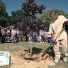"10/13/99---Pinewood Park fifth grader Dimitrian Thomas shovels soil around a maple tree planted Wednesday outside the school as classmates look on. The tree was planted in memory of classmate Nicholas ""Rudy"" Sterling who died in a house fire last year. Members of Rudy's class were honored with a plaque from Longview Fire Marshall Jim King for their efforts in raising money to buy smoke detectors to be given away. bahram mark sobhani"